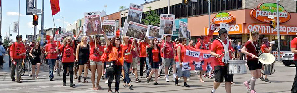 Toronto March to Close Down All Slaughterhouses, 11 June 2016 Photo: Agnes Cseke
